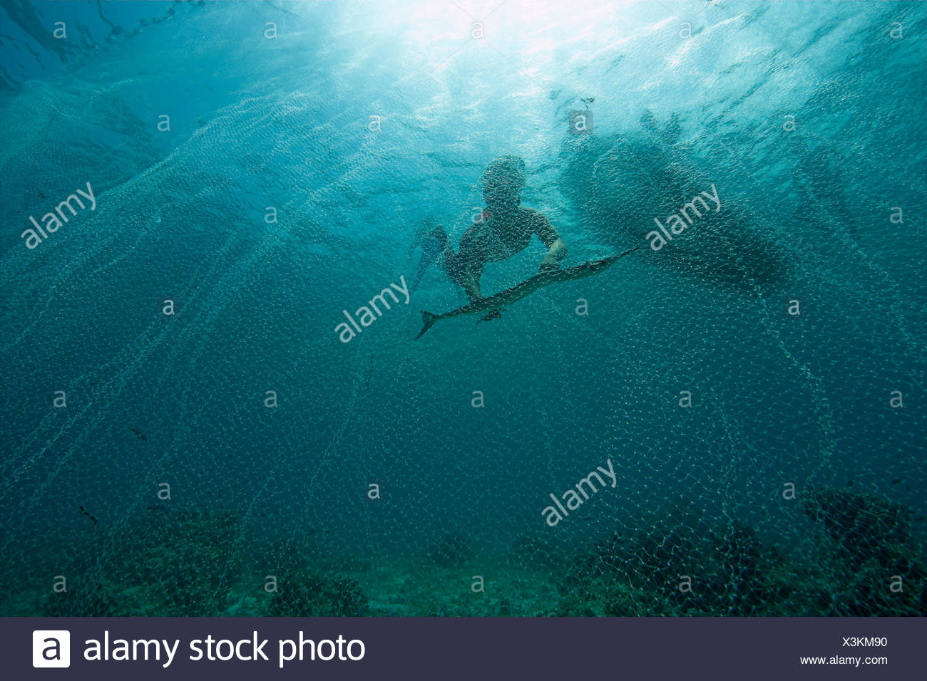 Fisher catch Pacific needlefish with a net, Philippines - Stock Image