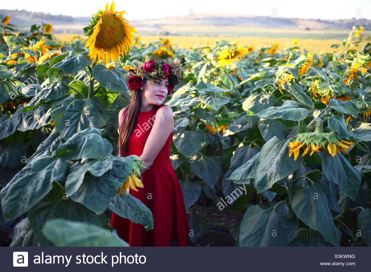 Preteen with wreath in a field of sunflowers - Stock Image
