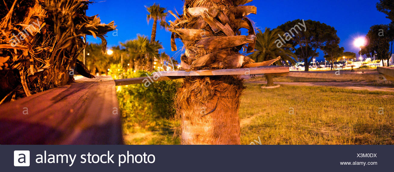 Wooden Planks By Palm Tree Trunk In Park At Dusk - Stock Image