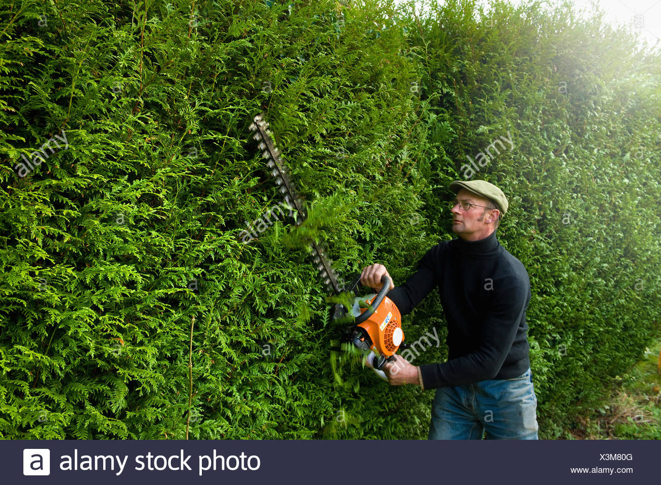A man trimming a tall hedge with a motorized hedge trimmer. - Stock Image