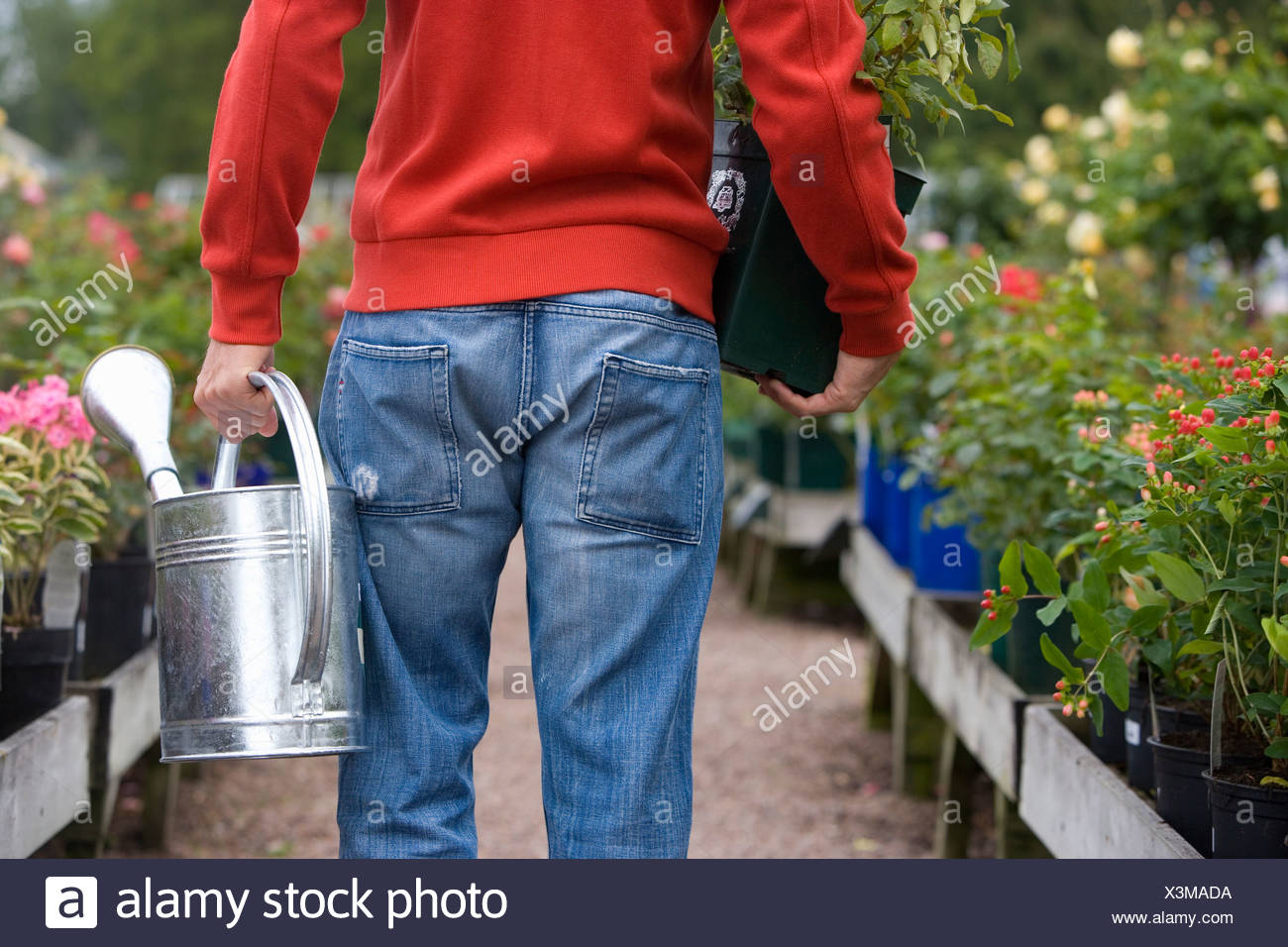 Man in nursery with watering can and plant, rear view - Stock Image