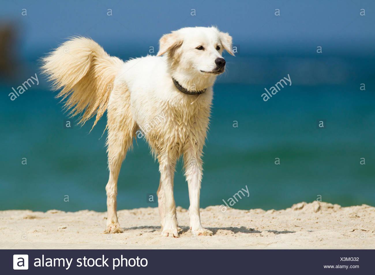 Dog plays on a beach - Stock Image