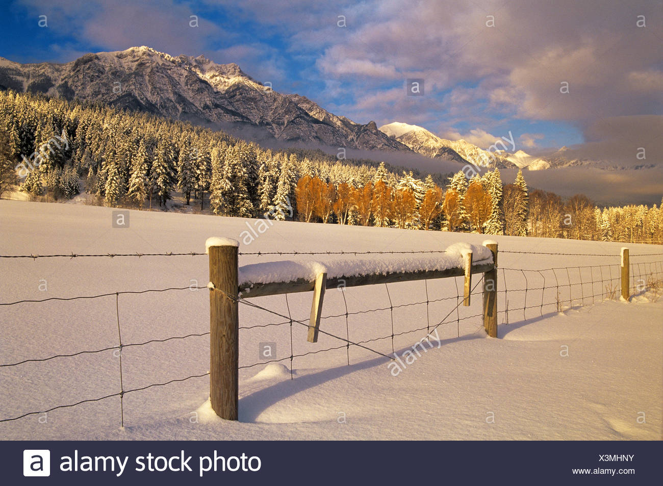 winter with fence and farmland at edge of Canadian Rocky Mountains  Edgewater British Columbia Canada - Stock Image