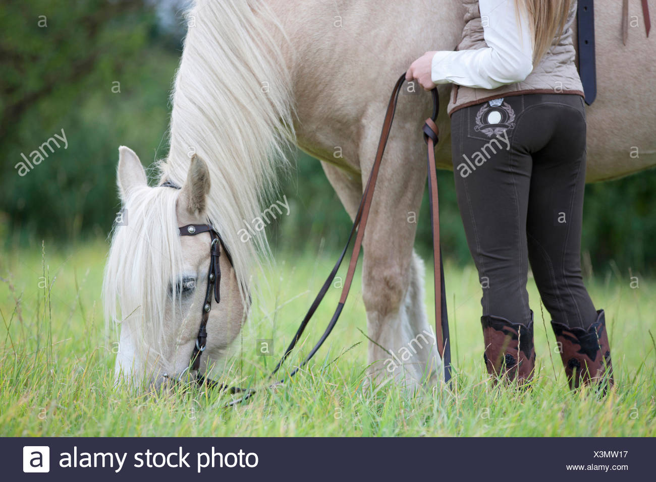 A young woman grazing a palomino horse, cropped - Stock Image