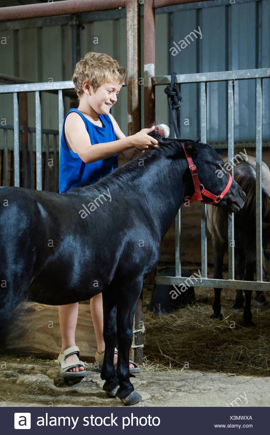 Boy brushing miniature horse's mane - Stock Image