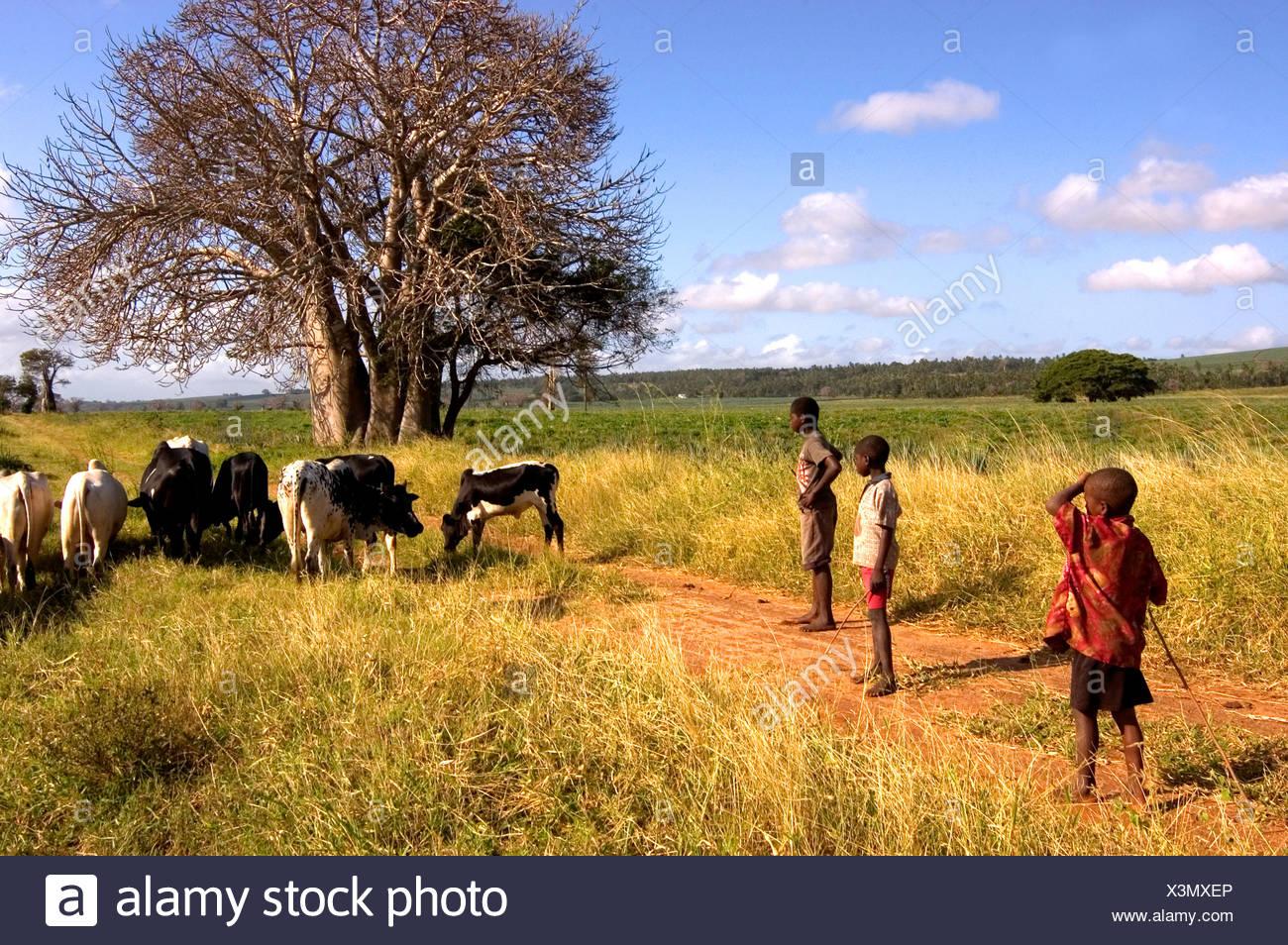 Hinterland, Kenya - Stock Image