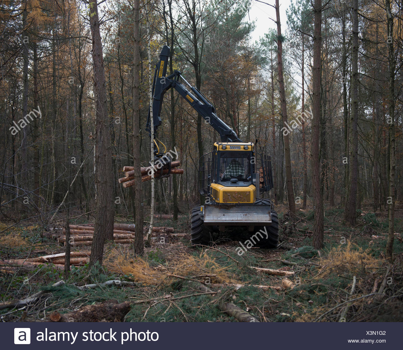 Forestry forwarder harvesting timber, working in a rough forest, Bonn, Rhineland, North Rhine-Westphalia, Germany Stock Photo