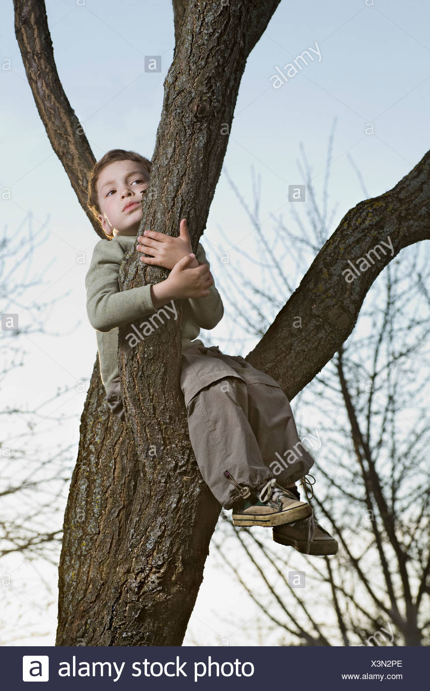 An unhappy boy sitting in a tree gripping a branch - Stock Image