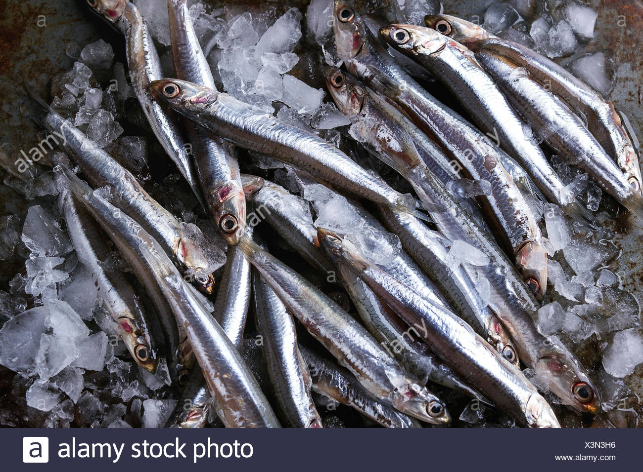 Lot of raw fresh anchovies fishes on crushed ice over old dark metal background. Top view. Sea food background theme. - Stock Image