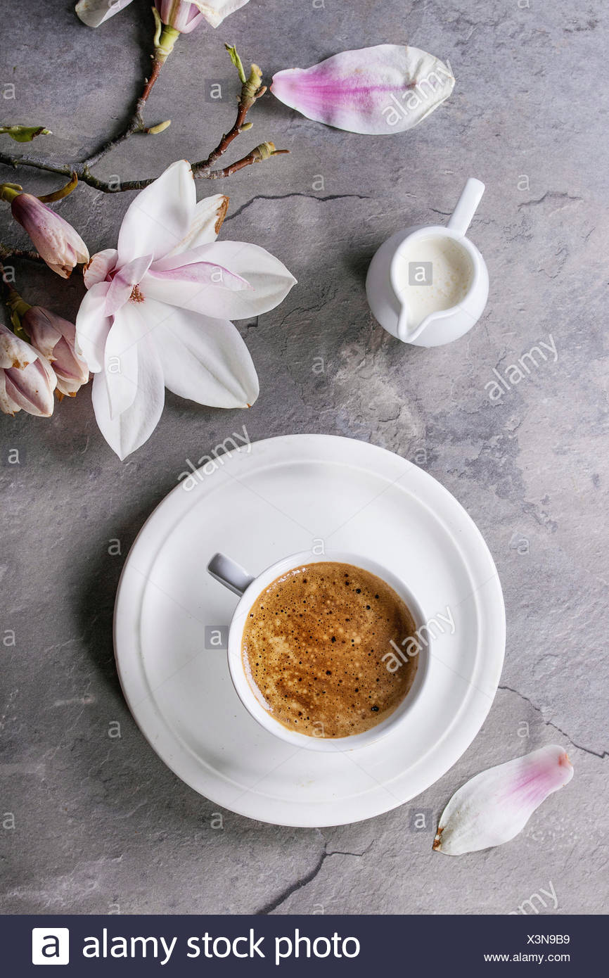 White cup of black coffee, served on white saucer with jug of cream and magnolia flower blossom branch over gray texture background. Flat lay, space - Stock Image