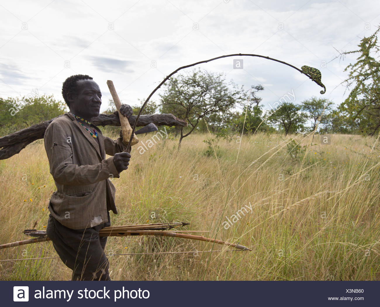 A Hadza man holds out a stick with a chameleon clinging to it. - Stock Image