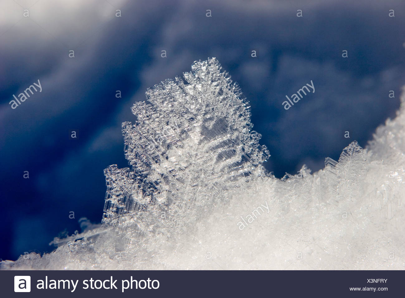 Snow cristals - Stock Image