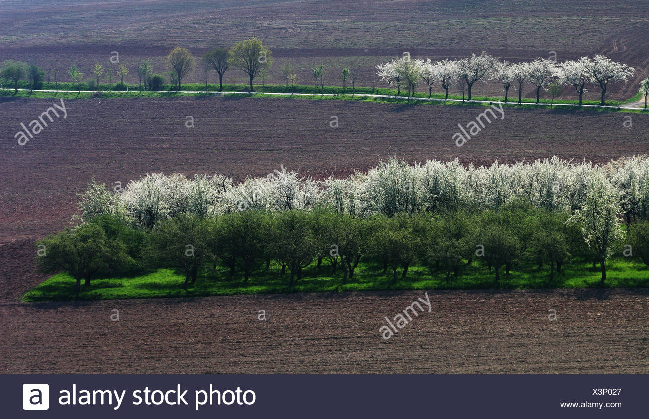 field fields oasis acre tree trees field blossoms spring fields oasis acre Stock Photo