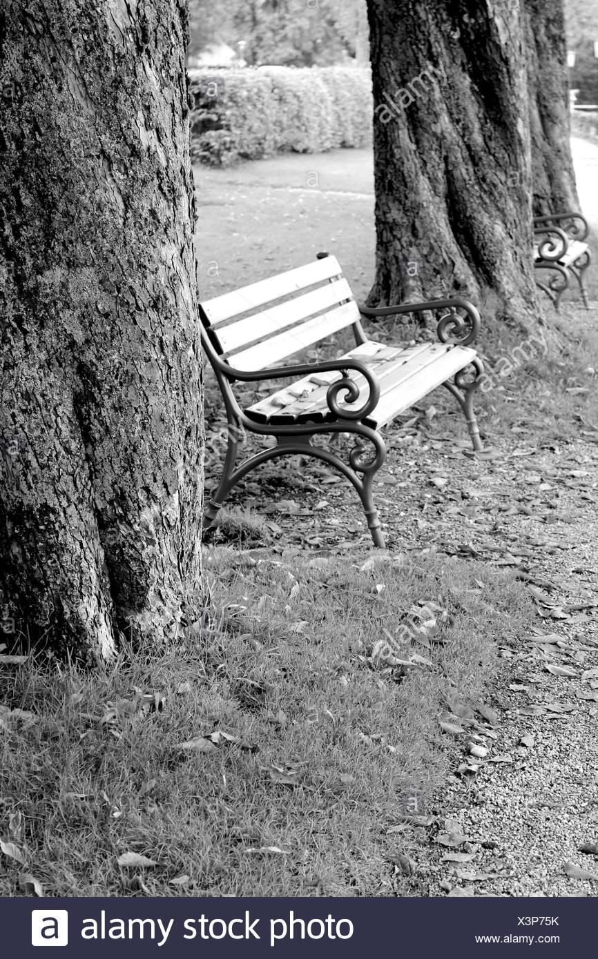 Trees, park bench, b/w - Stock Image