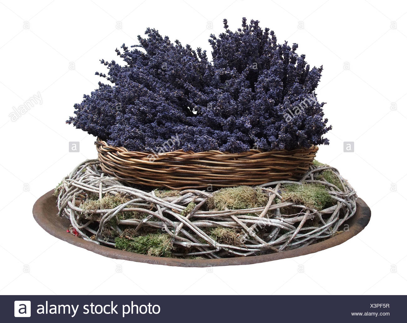 decorative arrangement with lavender flowers in white back - Stock Image