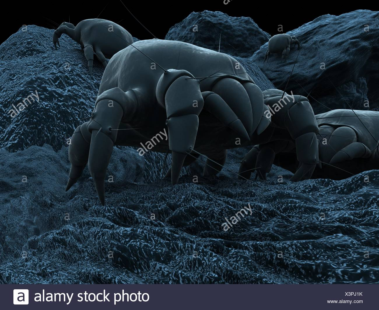 insect dust hygiene allergy mite bed dusty dirty bug bite micro electron - Stock Image