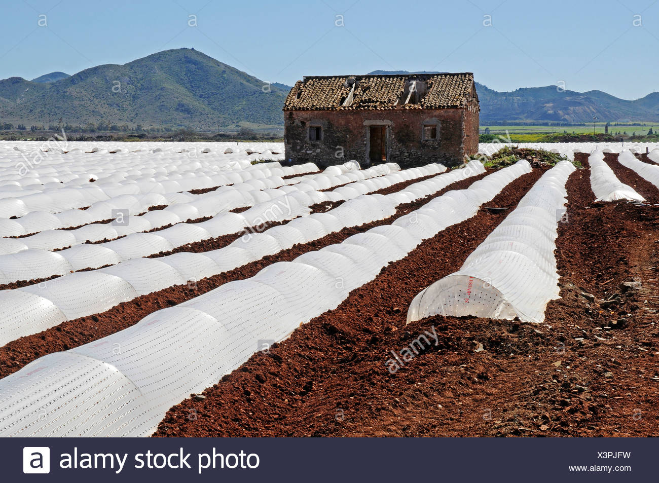 Arable land, cultivation, plantation, house, plastic sheeting, agriculture, Mar Menor, Murcia, Spain, Europe - Stock Image