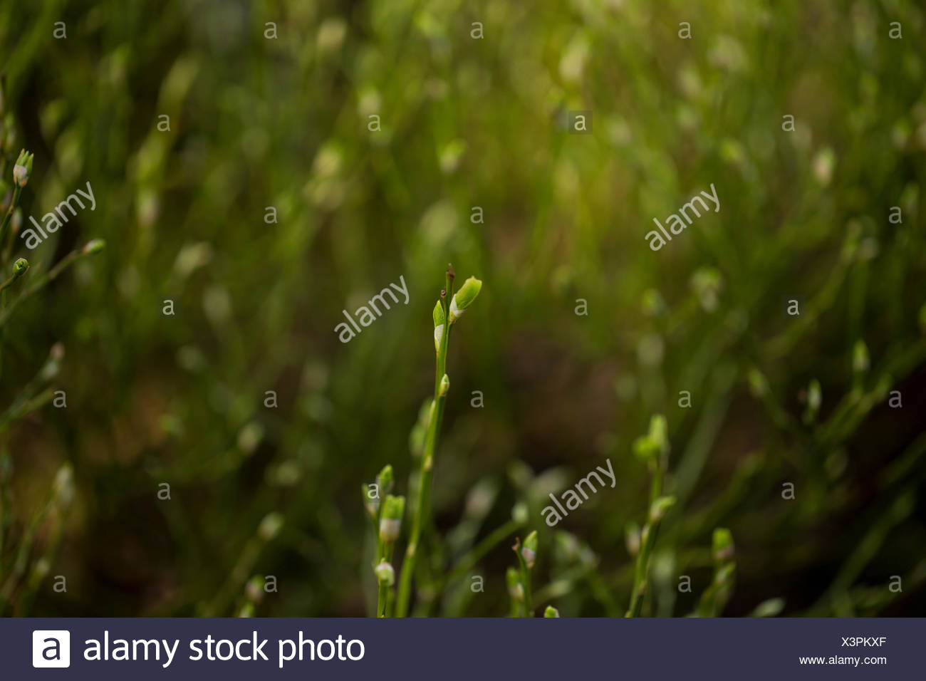 Green bushes. Rhoen Mountains, Germany - Stock Image