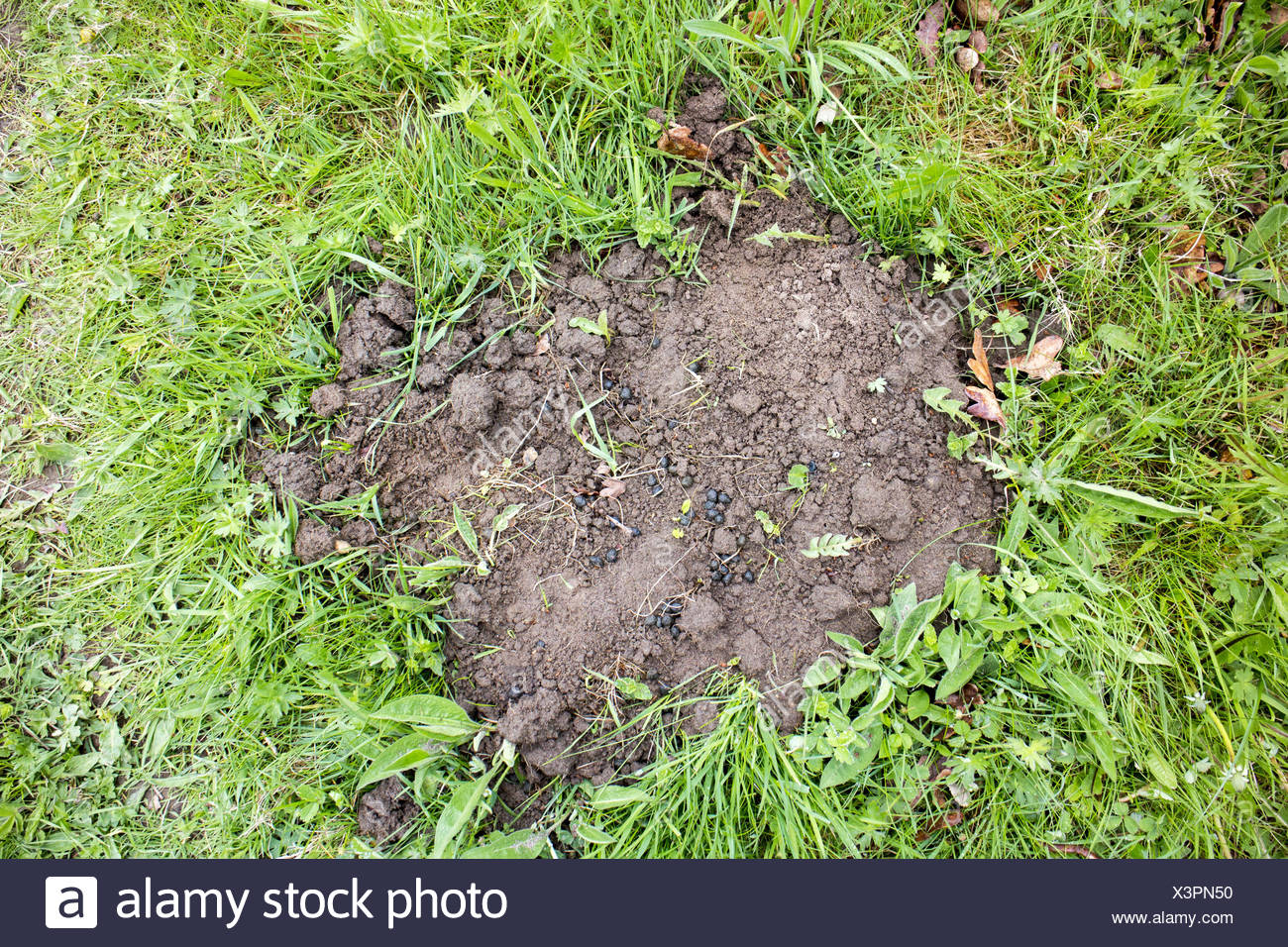 Rabbit Droppings Stock Photos & Rabbit Droppings Stock