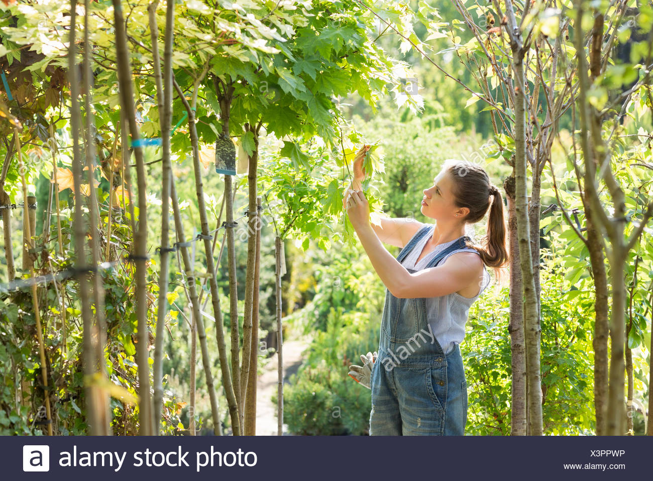 Woman examining leaves at garden center - Stock Image