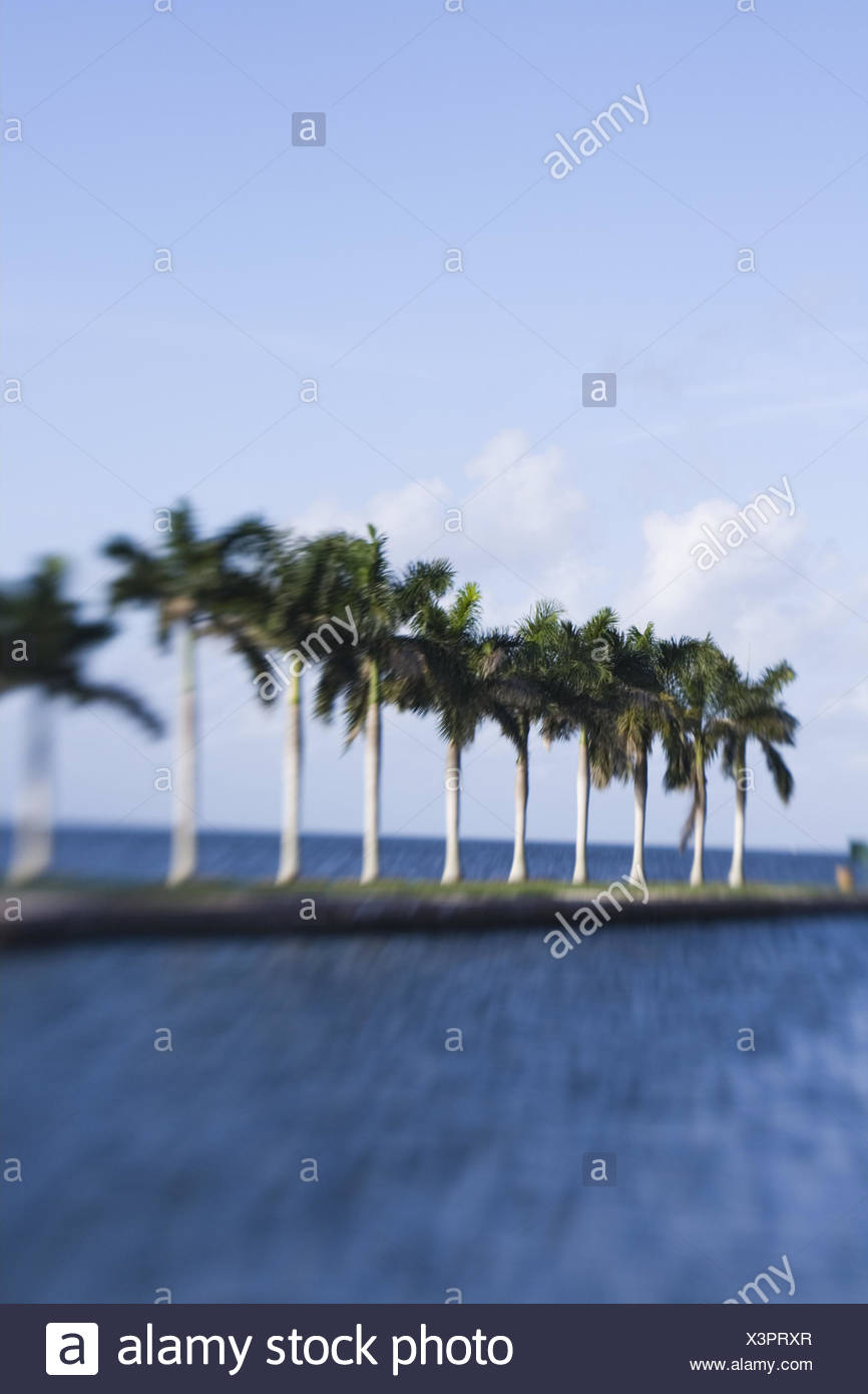 USA, Florida, Miami, Cutler Ridge,  Deering Estate, Landzunge, Palmen,  Unschärfe,  Nordamerika, Reiseziel, Sehenswürdigkeit, Kultur, Meer, Himmel, außen, menschenleer, Konzept, Urlaub, Reise, - Stock Image