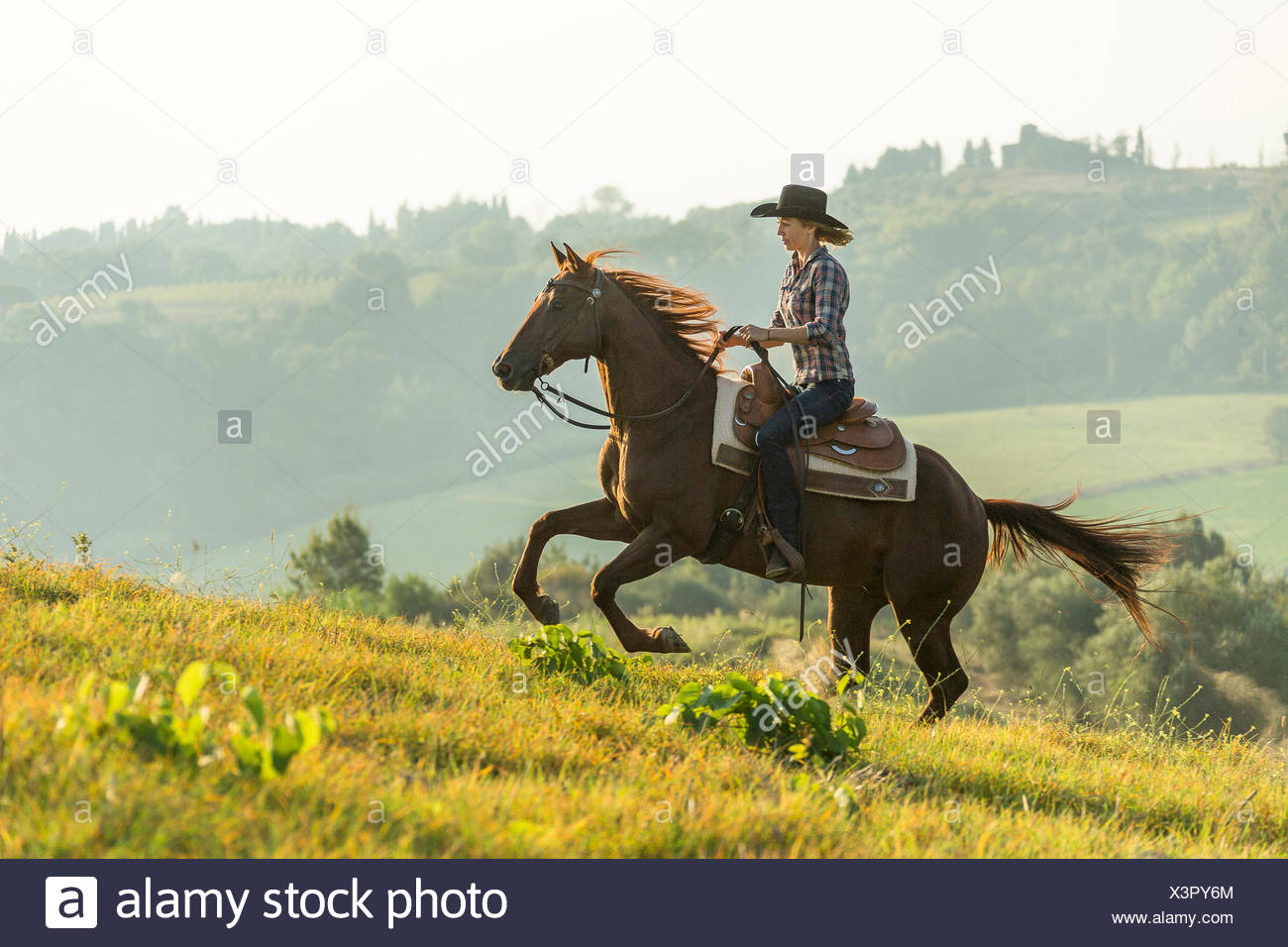 American Quarter Horse Rider galloping chestnut gelding Tuscany, Italy - Stock Image