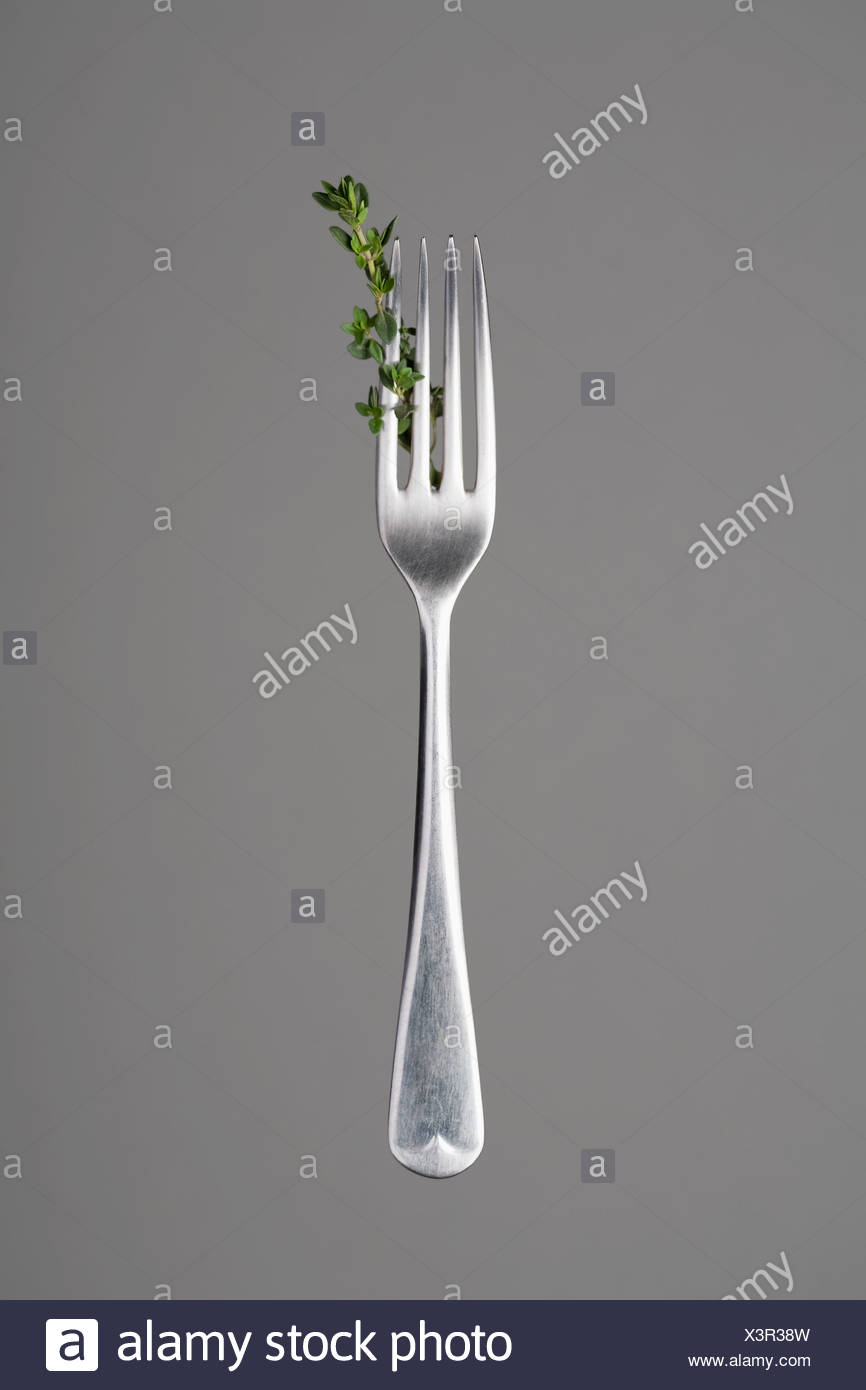 Fork with thyme branch - Stock Image