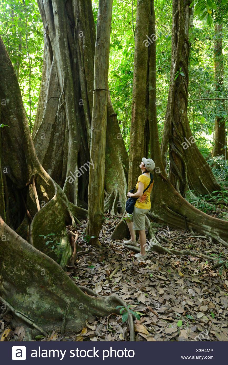 Central America, Costa Rica, Corcovado, National Park, Osa Peninsula, coastal forest, forest, tree, jungle, Puntarenas, - Stock Image