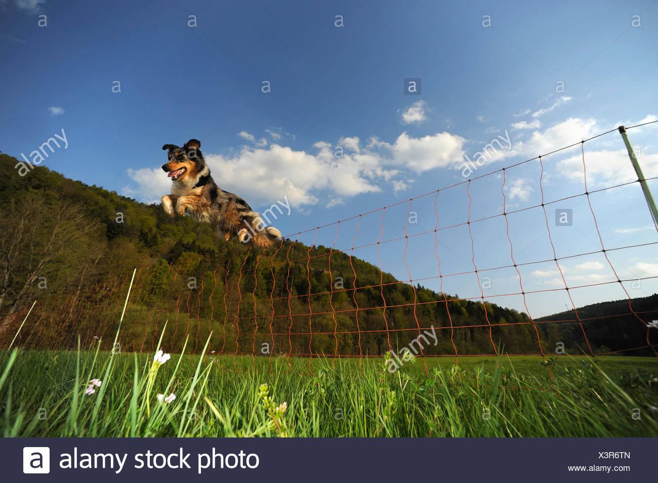 Dog Jump Fence Stock Photos & Dog Jump Fence Stock Images - Alamy