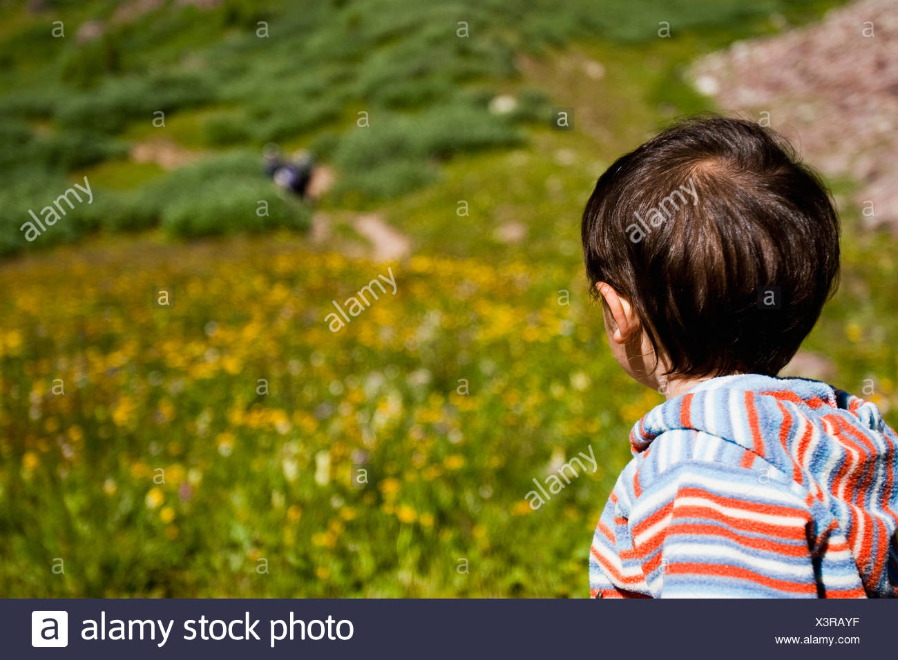 14 month old boy playing in meadow while on multiday backpacking trip in the Maroon Bells in Snowmass Wilderness outside Aspen. - Stock Image