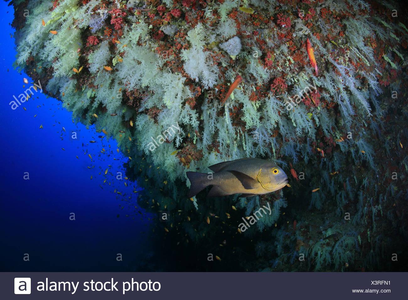 Großartig Korallenriff Bilder Zu Färben Fotos - Malvorlagen Von ...