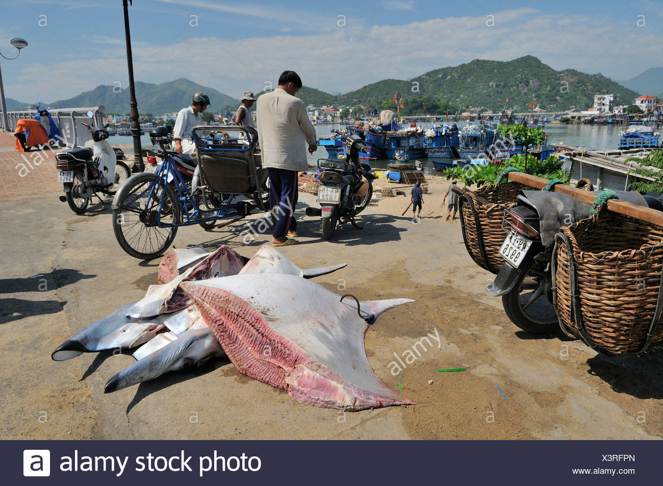 Giant stingray divided into parts waiting for transport, Vietnam, Southeast Asia - Stock Image