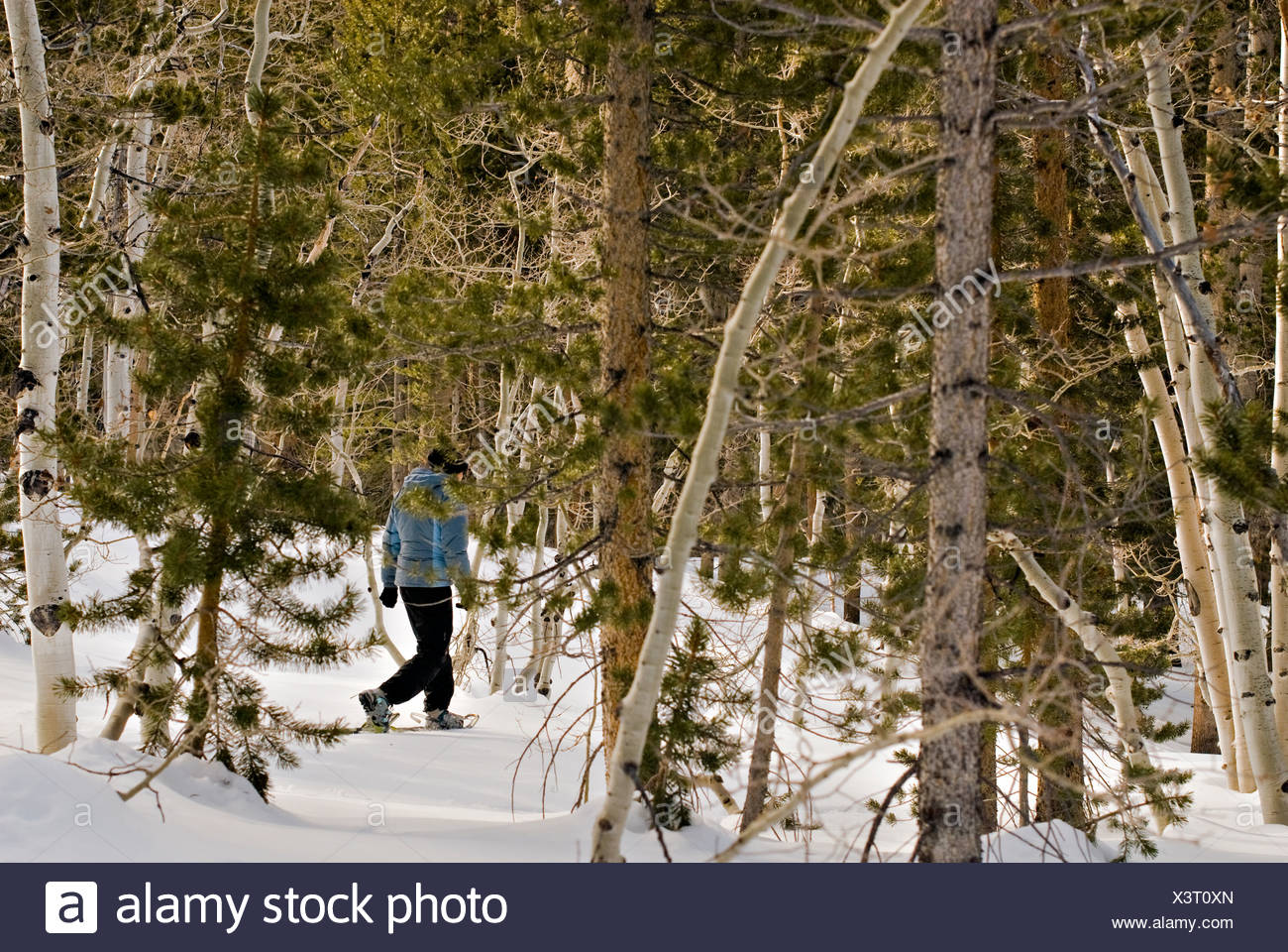 A young woman snowshoes through fresh powder near North Lake, Bishop, CA. - Stock Image