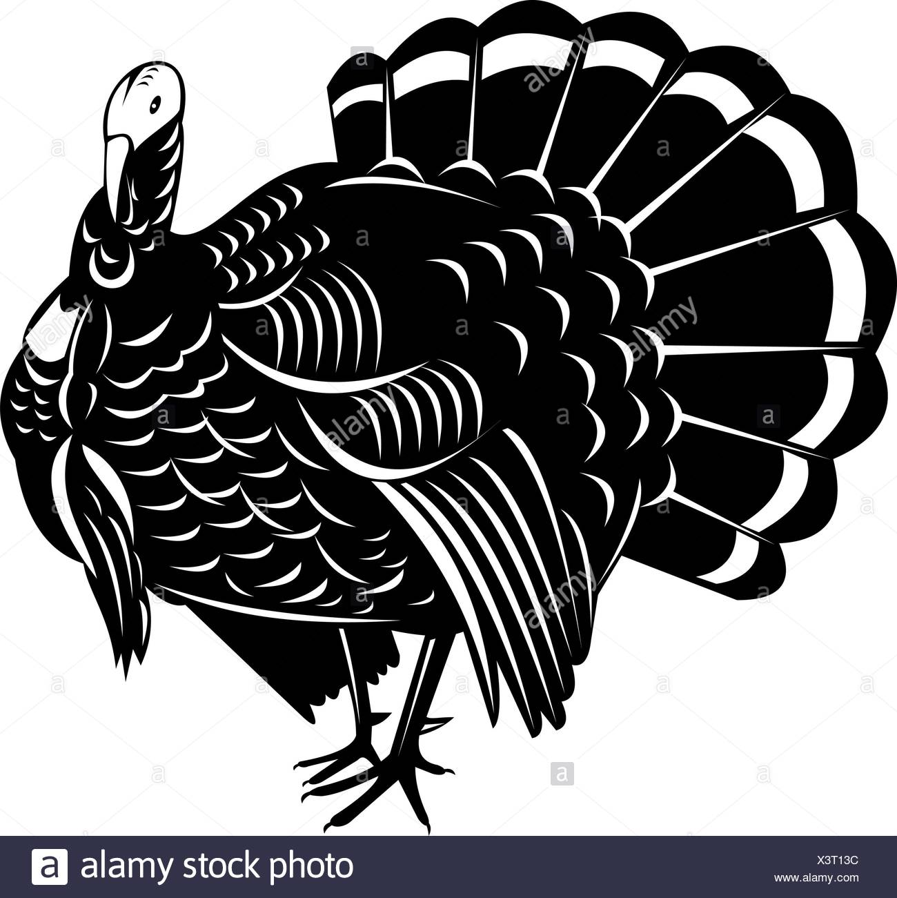 Wild Turkey Black and White Stock Photos & Images - Alamy