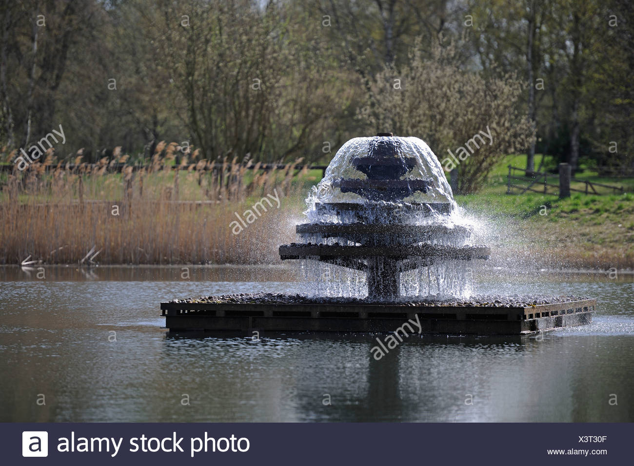 Fountain in a pond, Britzer Garten park, Berlin, Germany, Europe - Stock Image