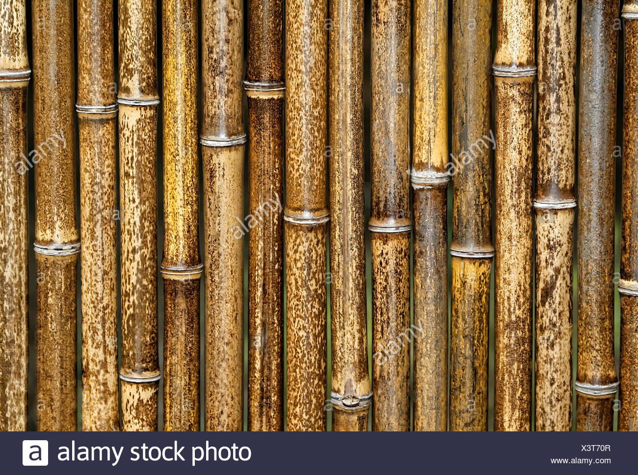 bambuszaun stock photos & bambuszaun stock images - alamy