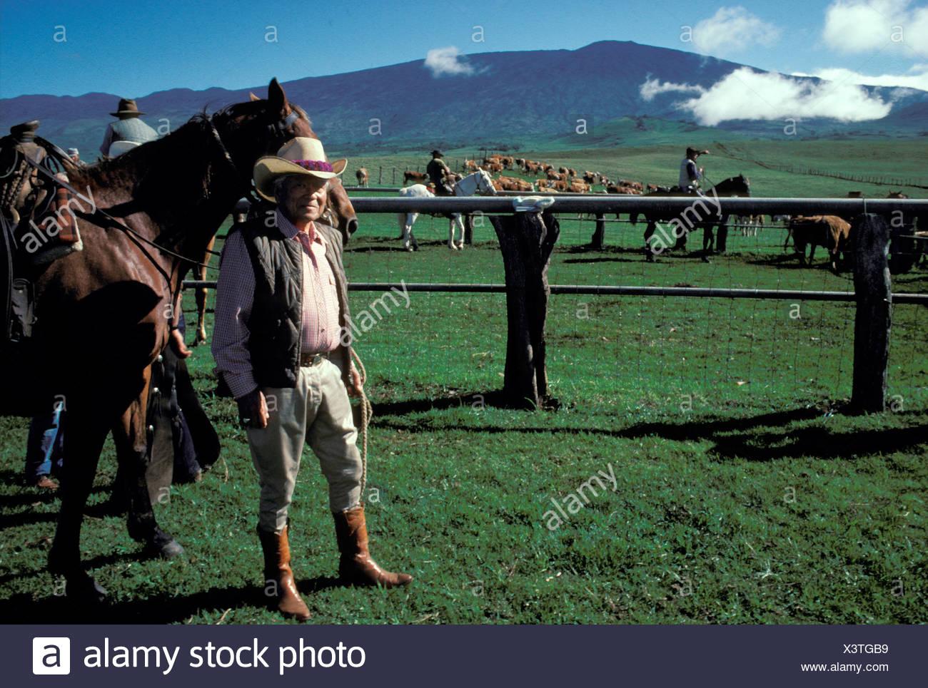 6484802a A Paniolo Hawaiian Cowboy Stock Photos & A Paniolo Hawaiian Cowboy ...