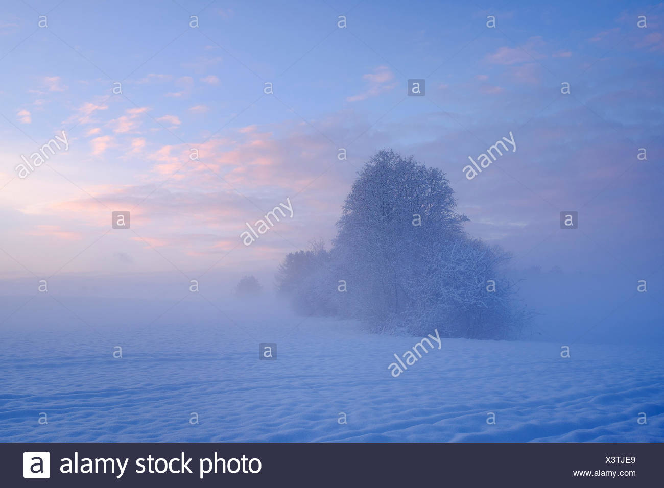 Germany, Gelting, mystical winter landscape at morning light - Stock Image