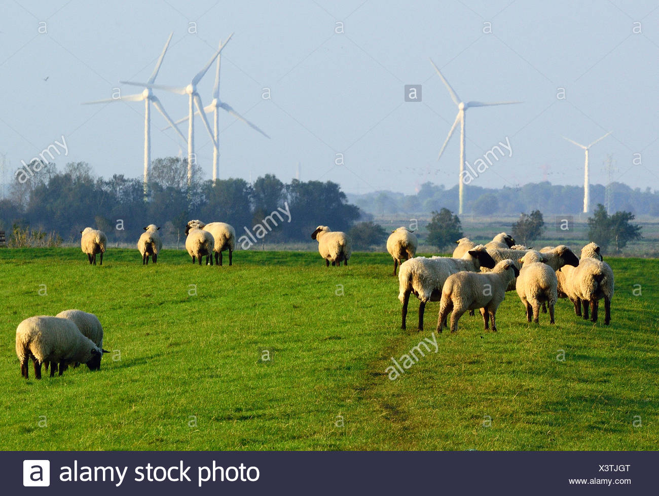 flock of sheep, wind wheels in the background, Germany - Stock Image