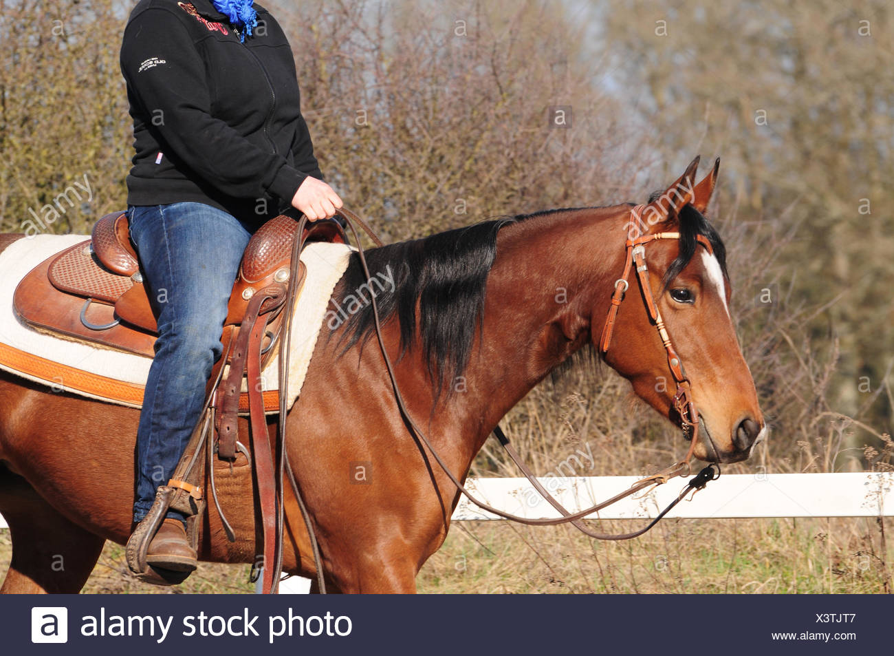 Western Riding American Quarter Horse Mare Workout Western Tack Snaffle With Shanks Western Saddle Stock Saddle Stock Photo Alamy