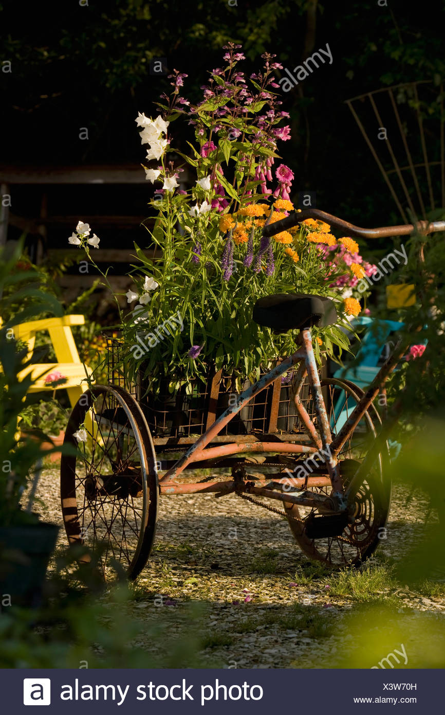 Antique tricycle carrying fresh flowers - Stock Image