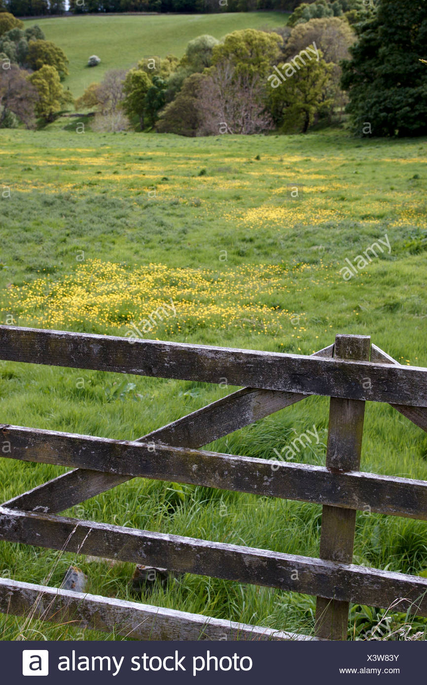 Scotland, near Ancrum, View of fence and meadow - Stock Image