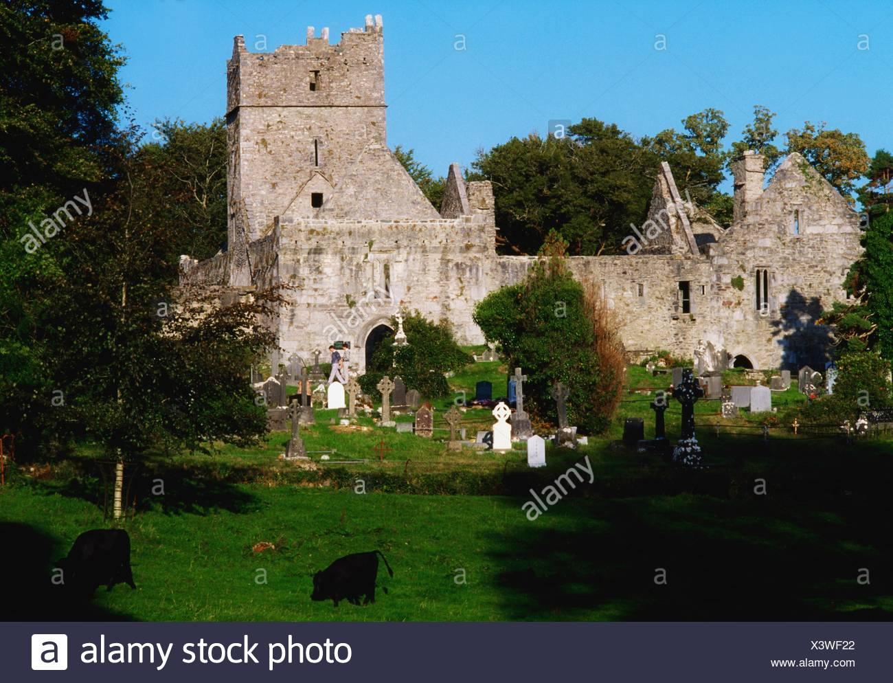Muckross Abbey, Co Kerry, Ireland, 15Th Century Abbey - Stock Image