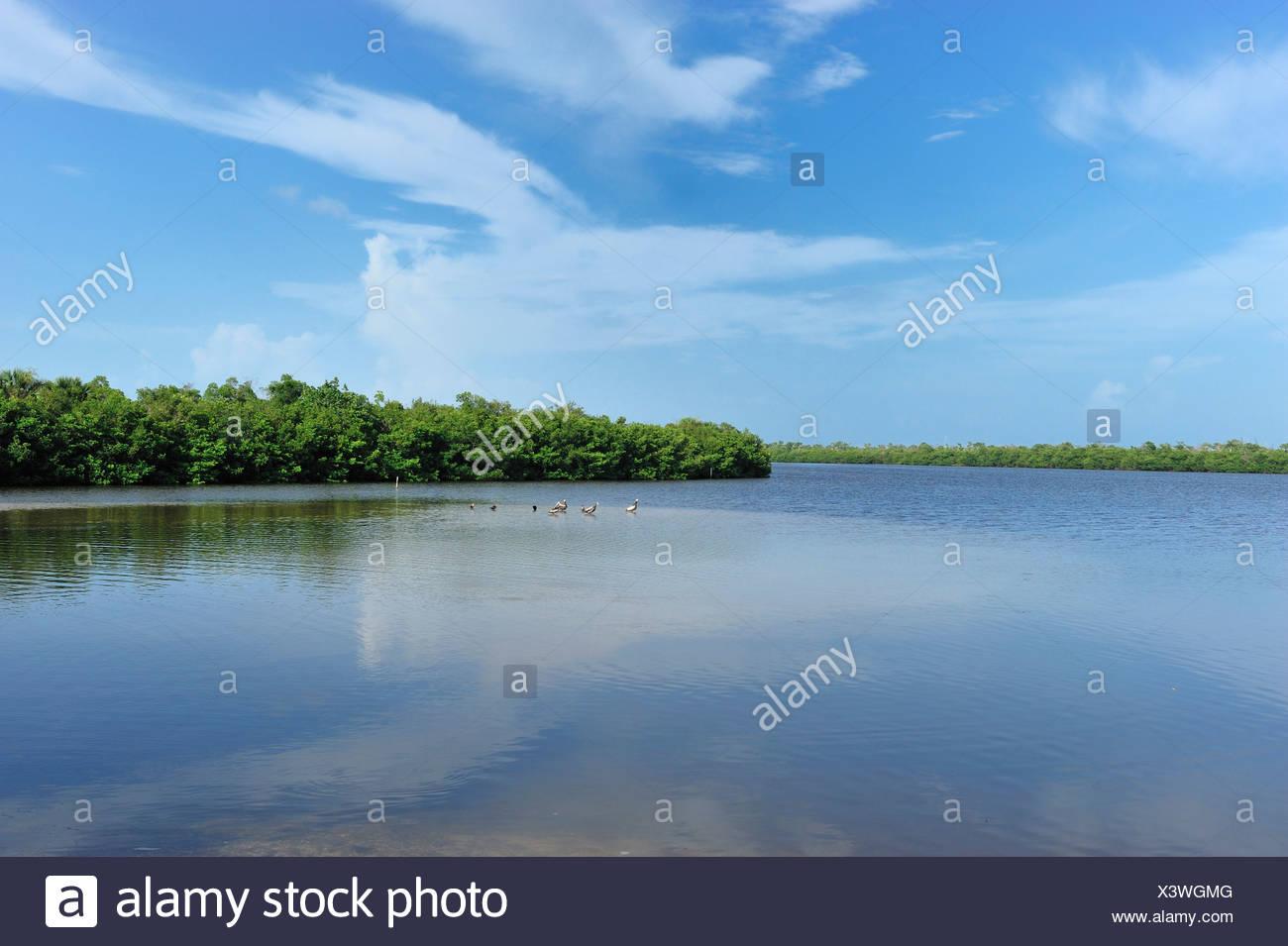 J. N. Ding Darling, National Wildlife Refuge, water, trees - Stock Image