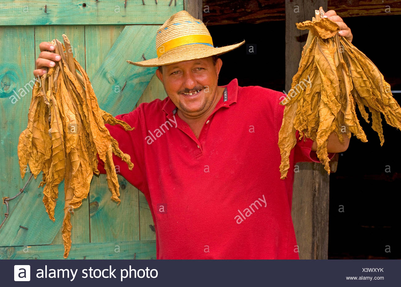 farmer proudly showing dried tobacco leaves, portrait, Cuba, Sierra del Rosario - Stock Image