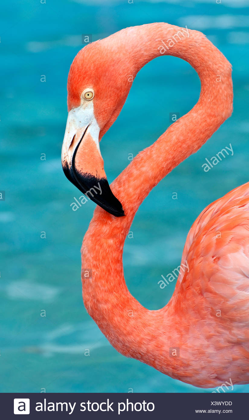 animal bird wild - Stock Image