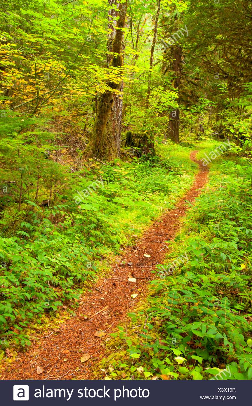Humbug Flats Trail, West Cascades Scenic Byway, Willamette National Forest, Oregon. - Stock Image