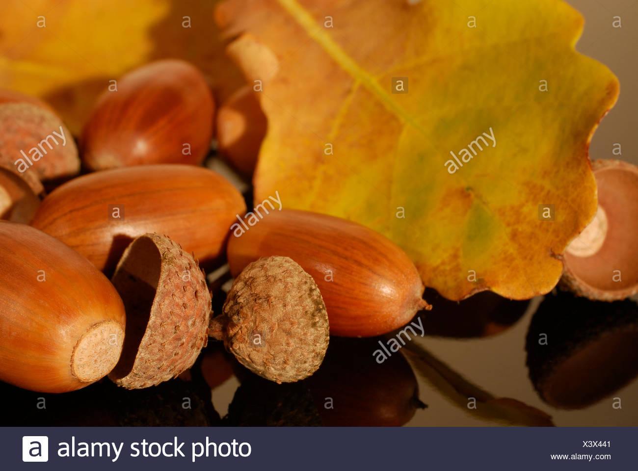 autumn messengers - Stock Image