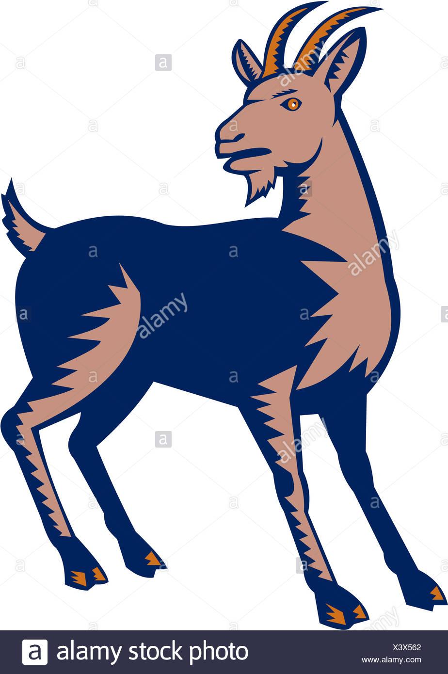 Domestic Goat Woodcut - Stock Image