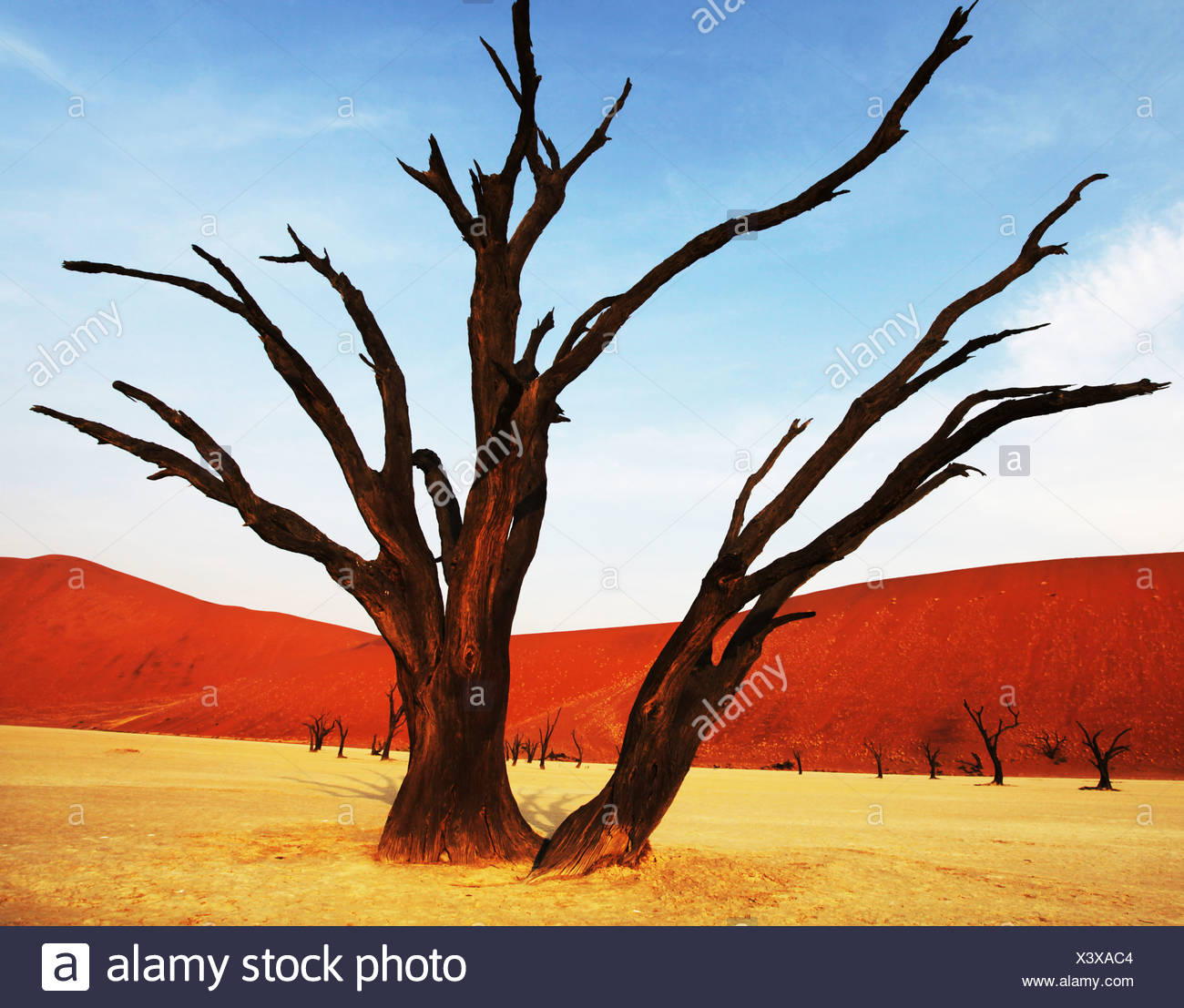Dead valley in Namibia - Stock Image